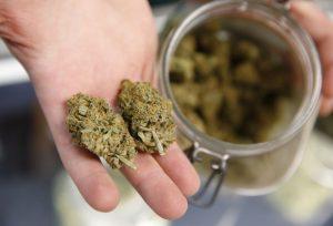 Marijuana Addict